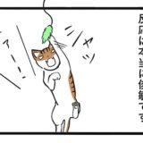 猫の動体視力:アイキャッチ画像