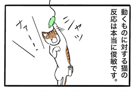 猫の動体視力